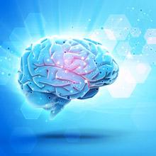 La plasticité cérébrale est notre processus d\'apprentissage