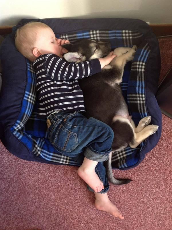 Un bébé s'est endormi avec un petit chiot dans une corbeille de chien.