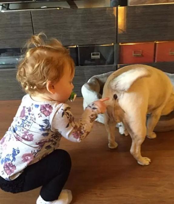 Une fille étudie avec attention le derrière de son chien.