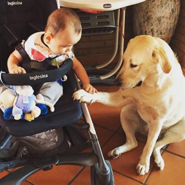 Un chien golden retriever garde un bébé dans sa poussette