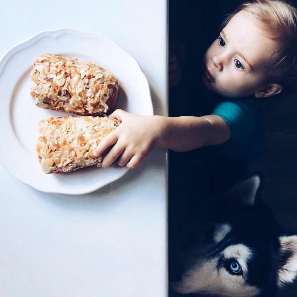 Un enfant et un chien husky trop mignons dérobent un petit gâteau