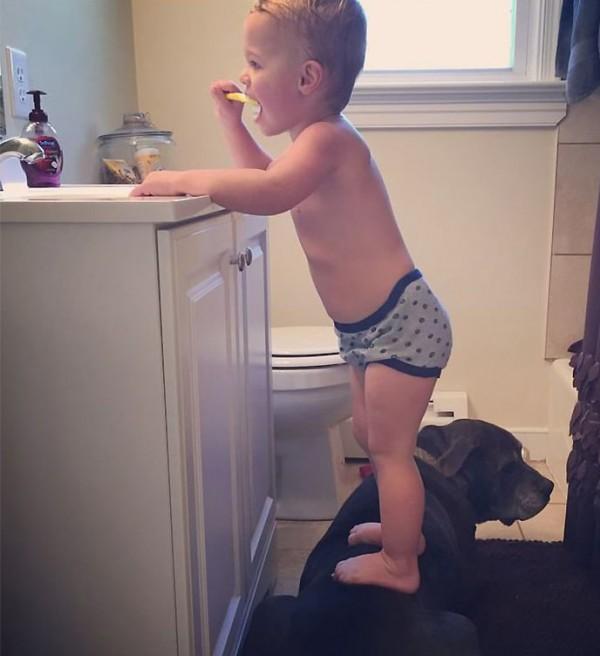 Un bébé lave ses dents debout sur le dos de son chien.