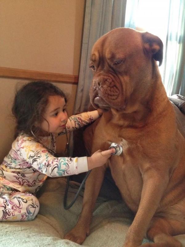 Une petite fille écoute battre le cœur de son chien avec un stéthoscope.